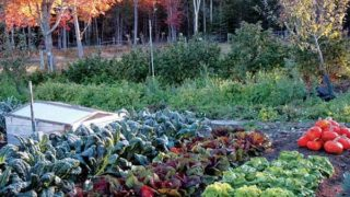 Gardening Tips For Fall To Feed Your Family Homegrown Veggies