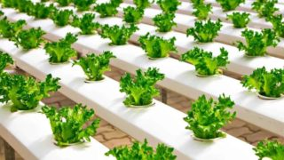 Gardening Without Soil Using Hydroponics