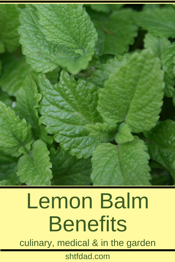 Learn about the many lemon balm benefits. Use it to make teas for better sleep and to keep stress and anxiety at bay. Make a salve to use as a natural remedy for cold sores. Use it in the kitchen to flavor salads and drinks, and you can even use it in the garden as an insecticide. One of the more versatile herbs.