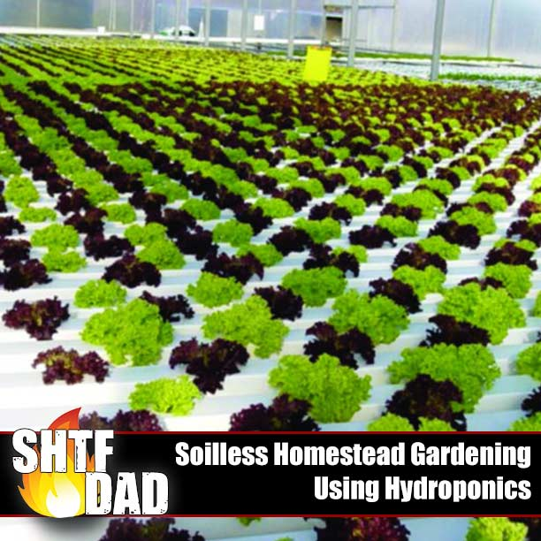 Soilless Homestead Gardening Using Hydroponics