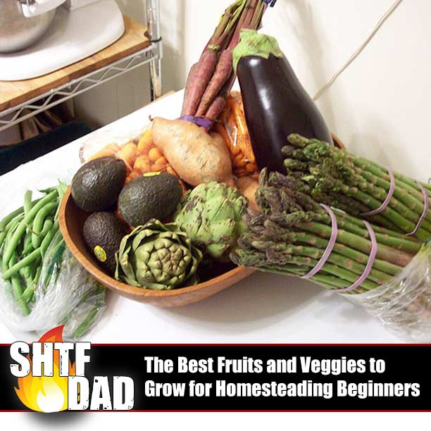 The Best Fruits and Veggies to Grow for Homesteading Beginners