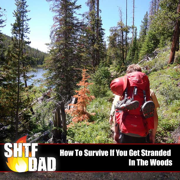 How To Survive If You Get Stranded In The Woods