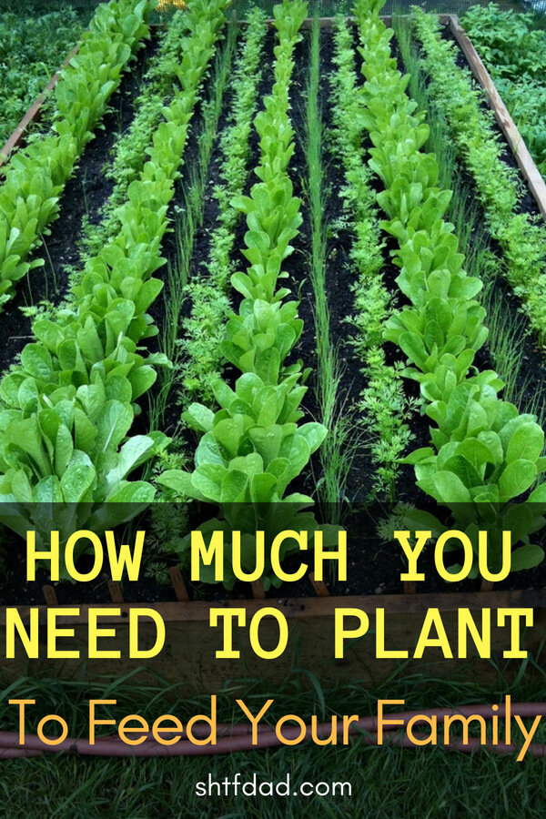 How Much You Need To Plant To Feed Your Family - This chart gives you a good idea of how much you need to plant to feed your family for each plant and seed you will need.