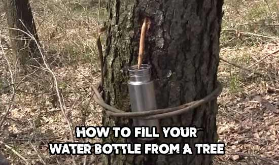 How To Fill Your Water Bottle From A Tree