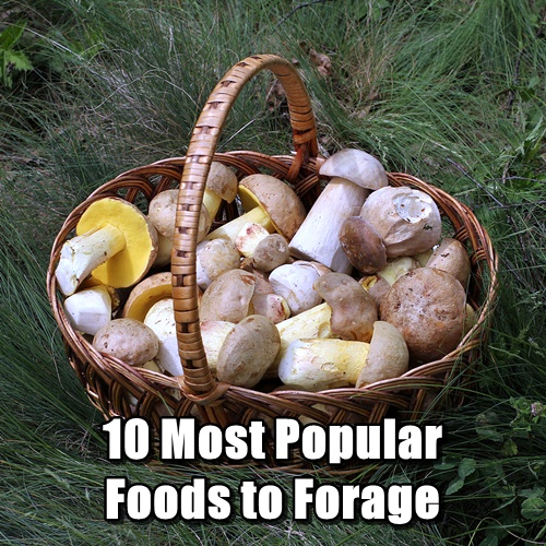10 Most Popular Foods to Forage