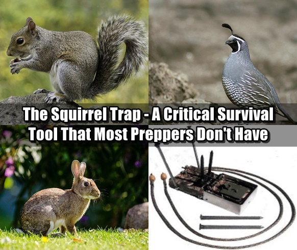 The Squirrel Trap - A Critical Survival Tool That Most Preppers Don't Have