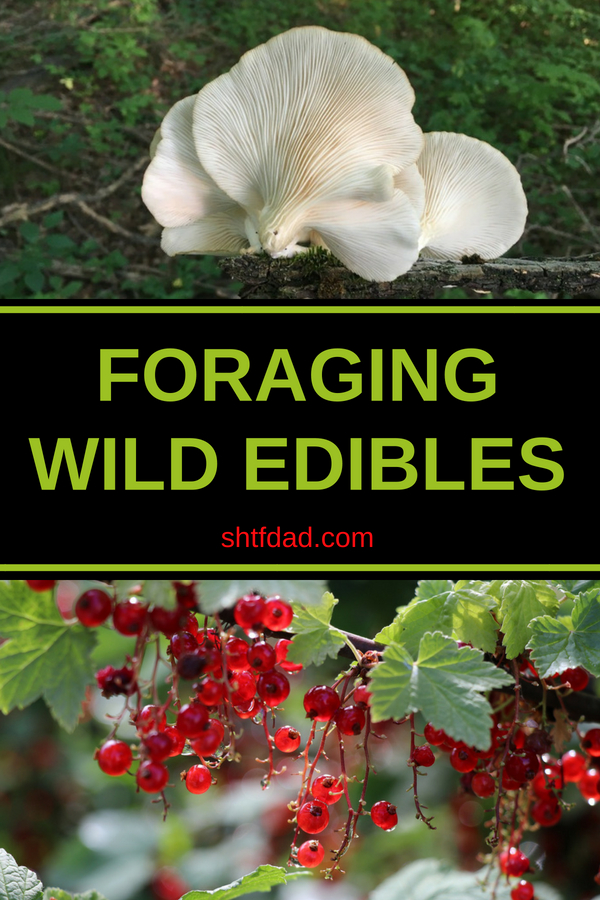 Foraging wild edibles is a must know skill for all. Learn all about the proper way to forage for food to stay safe. Mushrooms, flowers, nuts, seeds and more can be found in many places. #foraging #wildedibles #forageforfood #shtf #shtfdad #preparedness #survival