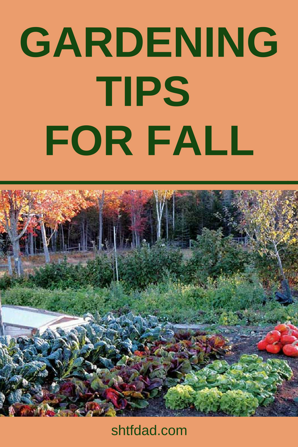 Extend your garden into the fall with these gardening tips for fall. Learn which veggies grow well in the cooler weather, and how to care for them. Get ideas for autumn gardening in raised beds or pots and enjoy fresh vegetables into the cold months. #gardening #fallgarden #shtf #shtfdad #organic #gardener #food #gardeningtips