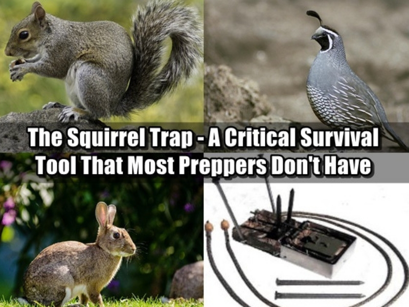 Small animals that can be caught with squirrel traps - the snap trap is one of the best squirrel traps for preppers and is a critical survival tool that few have in their bug out bags but absolutely should!