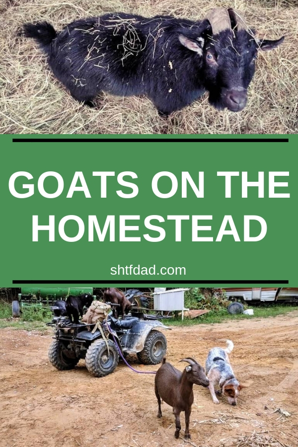 You need goats on the homestead. They're great
