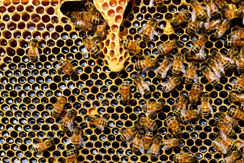 How To Start Beekeeping For Beginners - Want to keep bees on your homestead? Here's how to start beekeeping for beginners: all you need to know to be successful keeping bees.