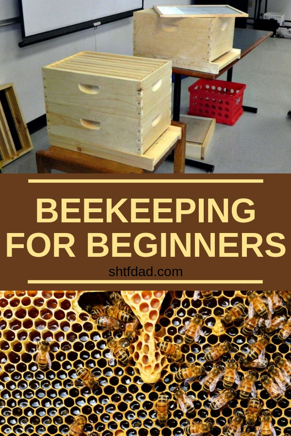 Adding bees to your backyard is a very smart idea: bees will pollinate your garden, make honey for your family and you'll help the environment by giving bees a safe place to be. Here's how to start beekeeping for beginners! #beekeeping #bees #organicgardening #beekeepingforbeginners #beehives #homesteading #gardening #honey #shtfdad