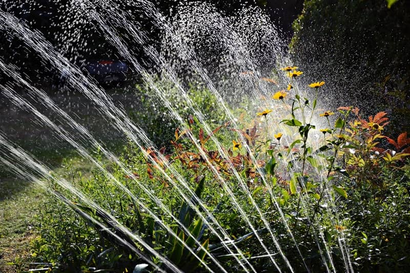 Final Watering - Preparing Your Garden For Winter