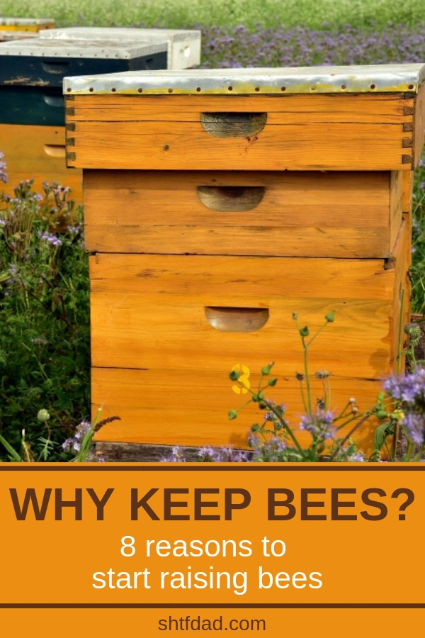 Have you ever wondered what would it take to raise bees? Would it be worth the work? Here are 8 answers to the question: why keep bees? Adding a couple of beehives in your backyard would have so many benefits! You'd get beautiful, golden, pure honey and beeswax, your garden would thrive, and you might even make some money. See all these beekeeping benefits for yourself! #beekeeping #honeybees #bees #pollinators #beekeepingformoney #shtf #shtfdad #organicgardening #homesteading