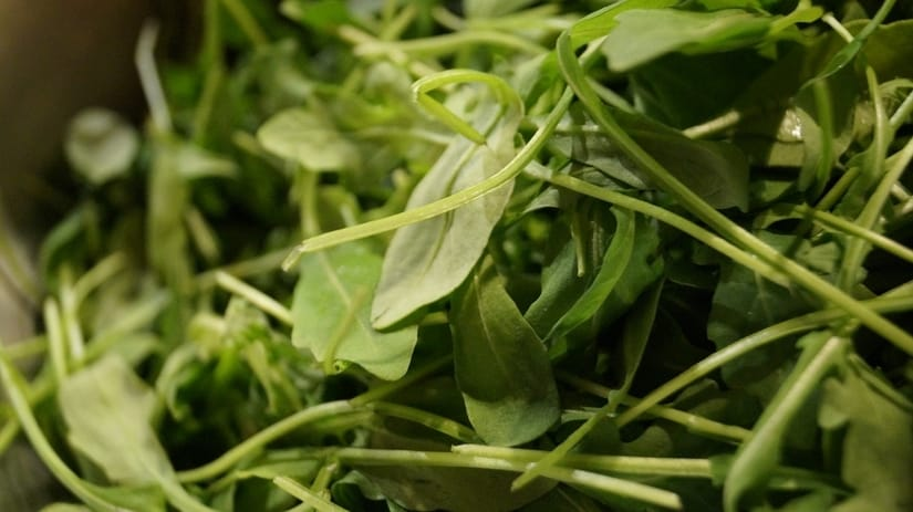 Arugula heirloom seeds have a high germination rate and make an ideal cold-weather green.
