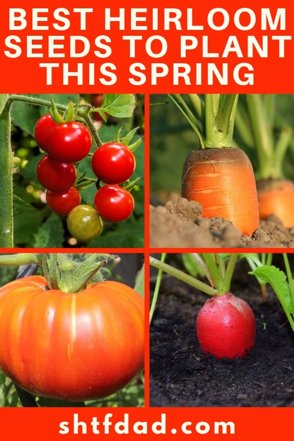 The best heirloom seeds to grow this season; find a favorite plant seed from a bygone era or start developing your own organic garden with heirloom seeds!