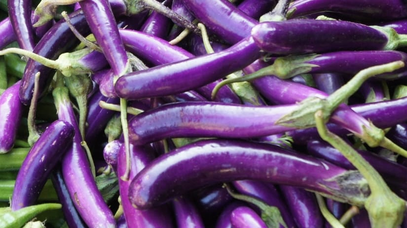 Heirloom seeds for this long, slender deep purple eggplant quickly became an American favorite for use in making Italian dishes.