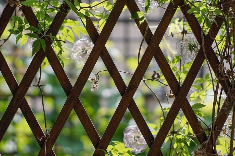Add Lattice and Climbing Plants to a Fence