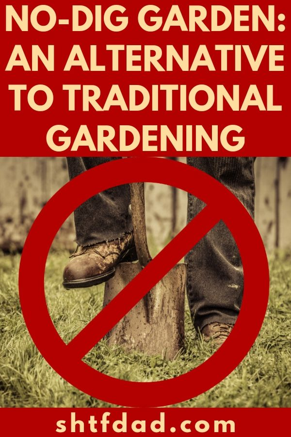 If you have a bad back or just want to avoid the hassle of digging when gardening, then just start a